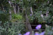 Highline garden