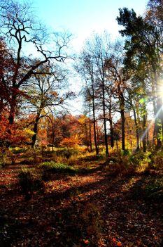 Bronx. New York Botanical Garden